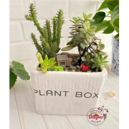 Интерьерная композиция «Plant box» (КР002)